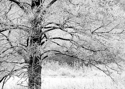 Mazury - Pejzaz zimowy