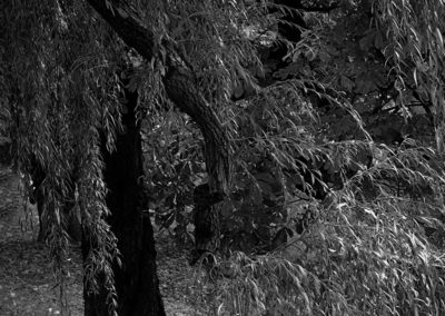 Park, drzewa, liscie.