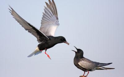 Let's get birdie!
