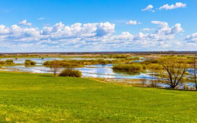 Biebrza and Narew rivers wetlands again full of life!