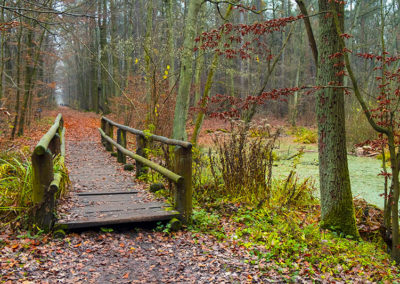 Autumn landscape of a foggy wood and a wooden footbridge over swamps in Kabacki Forest near Warsaw, Poland.