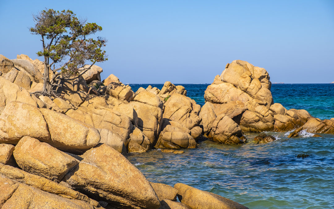 Vivia Sardegna! Viva Capriccioli! – despite all the circumstances…
